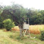 Ein Jagdhochsitz lehnt eng angeschmiegt an einen Obstbaum auf einer Streuobstwiese