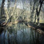 In einem ruhigen Gewässer spiegeln sich winterkahle Bäume.