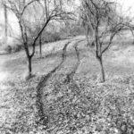 Ein Obstgrundstück, durch das eine geschlängelte Traktorspur vorbei an kleinen Obstbäumen führt. Schwarz-weiß-Bild.