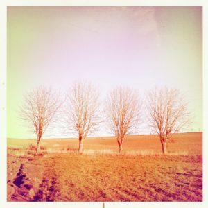 Ein rötlich verbrannt wirkender frontaler Blick auf vier kahle Kastanienbäumean frisch geeggtem Acker. Die Szene verliert sich in zart purpurnem Horizont.