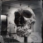 Schwarz-weiß-Foto eines Schädels in einem Museum. Die fliehende Stirn verrät, dass das Relikt zehntausende Jahre alt sein muss.