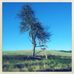 Im Profil lehtnt ein Hochsitz, die Leiter rechts, an einem alleinestehenden Obstbaum. Die wildwüchsige Wiese im Vordergrund geht in einen unbepflanzen Acker über. Tiefblauer Himmel
