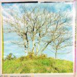 Underfootaufnahme junger, unbelaubter Bäume vor hellblauem leicht bewölktem Himmel an einem mit Ginster und giftgrünem Gras bewachsenen Hügel. Das Bild hat einen künstlichen Rahmen aus scheinbar wahllos geklebtem rosa, gelbem, gemustertem Dekoklebeband.