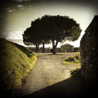 Stark vignettiertes, grünlich graue Szene dreie großer Pinien vor einer Friedhofsmauer, über die die Gfuten hinwegragen. Das Bruchsteingebäude rechts wirft einen schrägen Schatten auf die Straße.