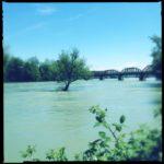 Einzelner Baum im Fluss vor einer Esienbahnbrücke. Grünlich blaue Fehlfarben. Im Vordergrund Uferbewuchs Brombeerhecke.