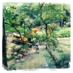 Gelber Bagger hinter Zweigen und Ästen an einem Bach im Wald. Perspektive etwas von oben auf einem Hang abwärts blickend.