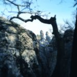 Knorriger, krüppelger Ast ragts ins Bild vor einer Felswand, aus der sich zwei markante, fingerartige Felsen recken.