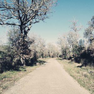 Überbelichtungsszene eines schmalen Teerwegs, der dadurch fast weiß erscheint. Mit hohem Kontrast züngeln die Äste einer großen Eiche links des Wegs im blassblauen Himmel.