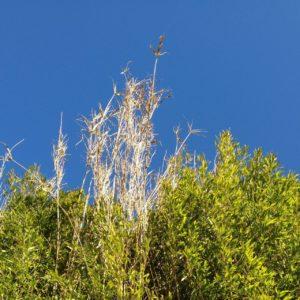 Hinter giftgelbem Grün wuchert etwas Kahles in den blauen Himmel