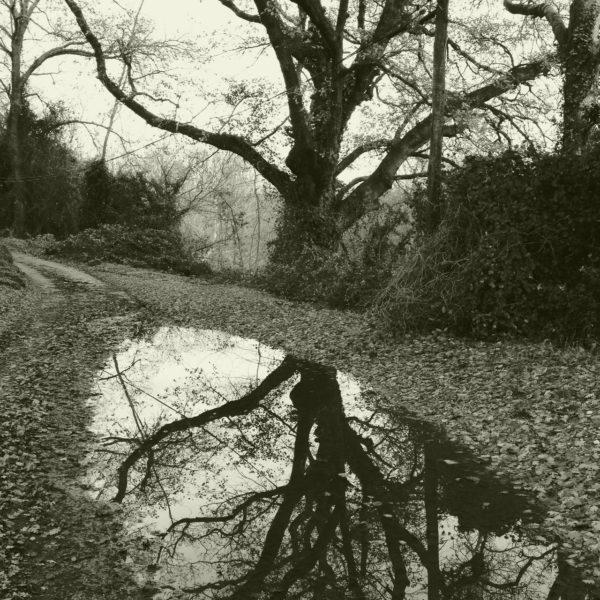 Ein weit auskragender Baum mit kahlen Ästen und zweigen spiegelt sich schwarz-weiß in einer von Laub umlegenen Pfütze