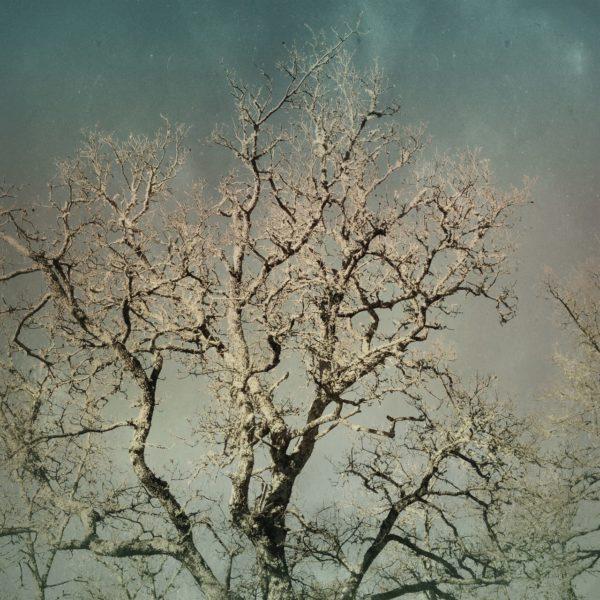 Krone eines kahlen, winterlichen Laubbaums vor graublauem Himmel