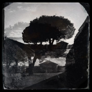 Düsteres schwarz-weiß-Bild einer großen Pinie neben einem Gebäude. Eine Spiegelungsverfremdung lässt das Bild gleichzeitig Kopf stehen.
