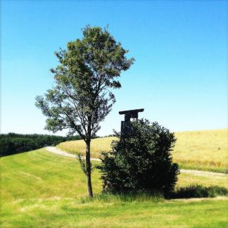 Hochsitz neben Baumgruppe auf offenem, muldigem Feld.