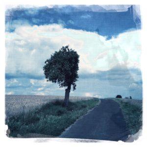 Die runde Krone eines Apfelbaums am Wegrand wurde gerade abrasiert, so dass eine Halbkugel entsteht. Das Bild hat einen düsteren, graublauen Touch.