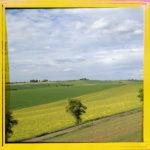 Gelb gerahmtes Bild etwas von einem Hang gesehen mit Blick auf einen Streuobstbaum. Die diagonale Linienführung der Felder in Rapsgelb erzeugen eine gepmetrische Struktur