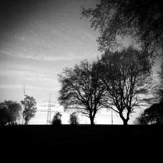 Schwarz-weiß-Bild mit Baumsilhouetten und Vignette zu den Ecken hin. Gegenlichtaufnahme