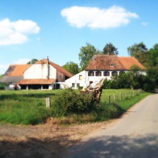 Dicker, gestutzter Weidenbaum vor Wiese vor altem Bauernhaus.