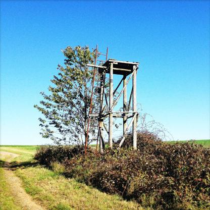 Unfertiger Hochsitz als reine Plattform mit Leiter ohne Geländer oder Wände in einer Hecke vor blauem Himmel.
