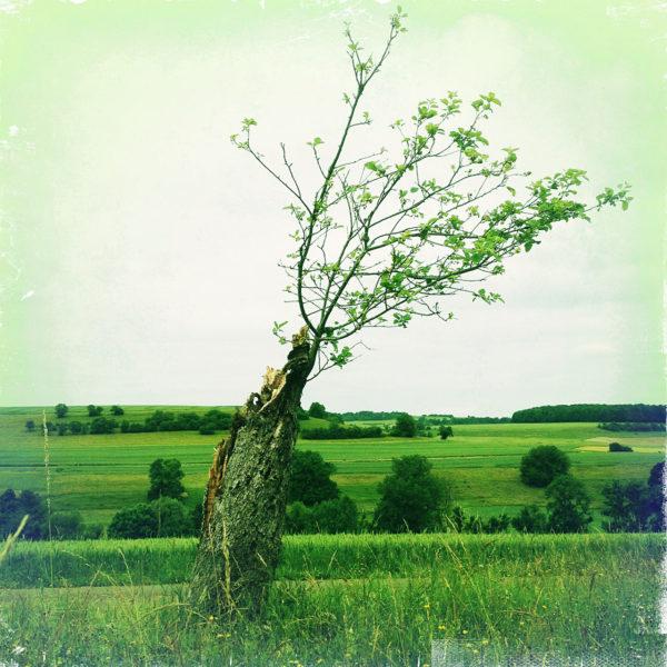 Giftgrünes Bild mit einem schräg nach rechts hängenden Bäumchen, dessen Krone offenbar gestuzt wurde und nun zwar wieder ausschlägt aus dem kleinen Stamm.