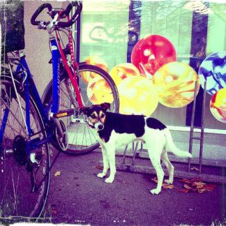 Angeleint an einem Fahrrad, das voe einem Schaufenster voller bunter runder Dinge abgestellt, blickt der kleine, gefleckte, schwarz-weiße Hund über seine Schulter und wirkt irgendwie betroffen. Das Bild hat sehr intensive Farben in sattem Rot und dunklem Blau.