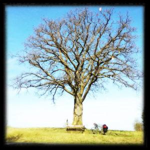 Ein Baum im offenbaren Frühling noch ohne Blätter mit weiter runder Krone und mannigfaltigem Geäst. In dem quadratischen Bild mittig und daruter eine Parkbank, sehr klein, ein Fahrrad und ein Mensch im Schneidersitz rechts daneben.