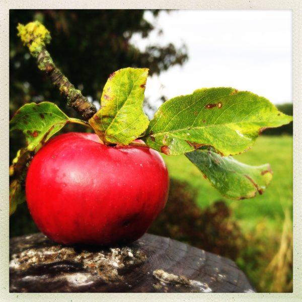 Frisch geernteter roter Apfel auf Stein mit Stiel und Blättern vor Landschaft.