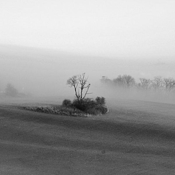 Schwarz-weiß-Bild eines fernen Baums auf einer von Büschen bewachsenen Insel in kargem Feld vor sich lichtendem Nebel.