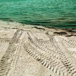 Eine Reiefnspur eines offenbar allradtauglichen großen Fahrzeugs führt über weißen Sand schräg auf eine Wasserlinie hinzu. Das Wasser hat einen grünlichen Farbton. Sanfet Wellen sind zu sehen und ein bisschen Tang.