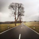 Gerade Landtraße mit zwei hohen, laublosen Bäumen links, markante weiße Markierungen und bedeckter Himmel