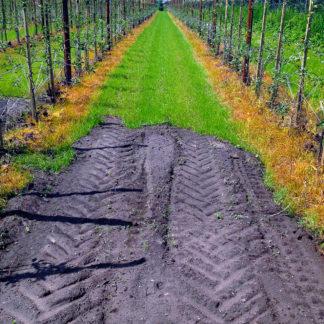 Zwischen Obstplantagenreihen ein bisschen Gras gesättigten Grüns, das von einer Reifenspur auf sandiger Fläche gestört wird.