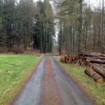 Waldweg mit Holzlagerung rechts und Lichtung links.