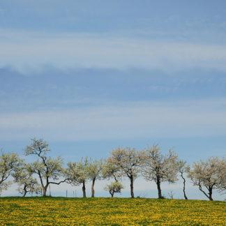 Horizont einer gelblich-grünen Wiese mit noch kahlen Bäumen, die in den milchig-blauen Himmel ragen. Bäume und Wiese belegen das untere Viertel des quadratischen Bildes.