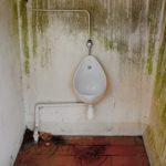 Ein eiförmiges Pissoir in schlanker, emaiilierter Ausführung an einer grün vermoosten Wand hängend. Die Rohrinstallation auf Putz ist deutlich sichtbar. Der Ziegelstein geflieste rötliche Boden ist schmutzig mit Lache und Erde und Laub in den Ecken