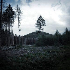 Düstere Waldlichtung mit kegelförmigem Berg im Hintergrund. Einzelne Nadelbäume sind noch vom Beinahe-Kahlschlag verschont geblieben.