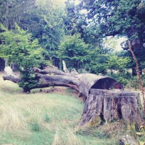 Wuchtiger alter Bau in grüner Umgebung liegt von rechts unten nach links oben abgesägt im Bild.