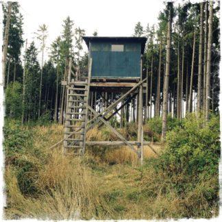 Ein grünblauer Hochsitz, ziemlich wuchtig, mittig auf einer frisch geholzten Fichtenwaldlichtung.