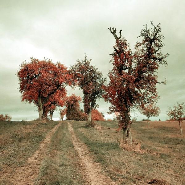 schnurgerader Feldweg führt zwischen herbstlich braun belaubten Bäumen auf wolkenschweren Himmel zu. Rechts ein unheimlich teilkahler Baum, der Vergänglichkeit suggeriert.