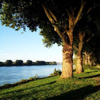 Eine schräge Zeile dicker, alter offenbar Pappeln auf einem grünen Streifen führt von links vorne nach rechts hinten vorbei an einem großen hellblau schimmernden gerade Fluss.