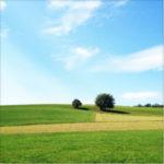 Hügeliger Landschaft grüner Wiesen durchbrochen von bräunlichen Flächen unter einem klaren, blauen Federwolkenhimmel.
