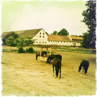 Einige Pferde grasen in dem fehlfarbigen, gelblich bis grünlichen Bild auf einer Koppel mit Tränke. Im Hintergrund grenzen Stallungen mit weißen Mauern und Satteldächern zum bleichen Himel ab. FRechts ein großer belaubter Baum mit fetter Krone vom Bildrand angeschnitten.