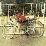 Ein blumengeschmücktes Fahrrad lehnt an einem Stahlstäbezaun.
