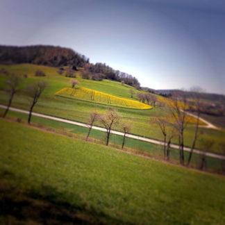 Schräg aufgenommenes Landschaftsbild einer hügeligen, grünen Landschaft mit eingeflickten Rapsfeldern. Unscharfe und abdunkelnde Vignettierung verleiht der Szene einen verwunschenen Anstrich.