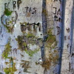Detailierter Blick auf einen geritzten Buchenstamm mit zahlreichen Verletzungen. Inschriften wie T+S, Zahlen und etwas Moosgrün darinnen.