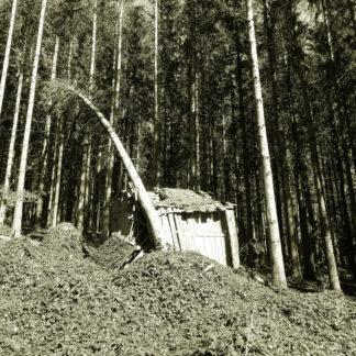 Unscharfes, dadurch verwunschenes Bild einer schiefen Hütte auf einer Lichtung im Wald vor wuchtigen dunklen Fichten. Ein einzelstehender Baum ist angezählt und biegt sich bedrohlich nach links vorbei an der Hütte, scheint sie mitreißen zu wollen. Schwarz-weiß Aufnahme.