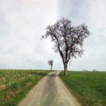Kalt wirkendes Bild eines großen Birnbaums rechts des Weges, gefolgt von einem fernen, kleinen Apfelbäumchen links des Wegs weiter hinten. Kalte graublaue Farben und etwas Grün.