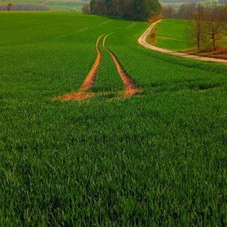 Tiefer Einschnitt der Feldbearbeitungsspuren in einem jungwachsenden Getreidefeld vor Wäldchen in der Bildmitte im Hintergrund.