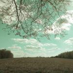 Wie durch einen Schlitz ruht das Auge des Betrachters auf einer in Cyan- und Grautönen scheinenden Landschaft. Waldränder rechts und links. Überhängende lichte Zweige erzeugen den Schlitzblickeffekt.