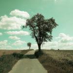 Grünlich bis cyan verfärbte Landschaft mit großem Birnbaum, der den Schatten nach vorne zum Betrachter, zur Betrachterin wirft. Ein schmaler, geteerter Weg zwischen abgeernteten Feldern. Weiter hinten ein zweiter, kleinerer Baum, ein Abfelbäumchen.