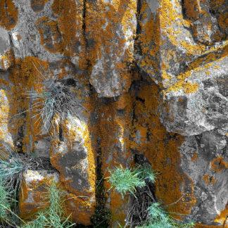 Nah dran mit der Nse an grauem Fels, der von künstlich übersättigt dargestellten Flechten bewachsen ist. In Ritzen wachsen filigrane Pflänzchen mit stacheligen Blättern.