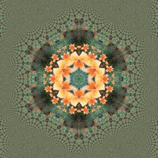 Aus orangenem Zentrum zieselt fraktal eine Sternstruktur, die sich in Blasen und Schleifen in den feingliedrigen Grautönen am Rande verliert. Vage macht das Auge eine Sechseckstruktur aus.